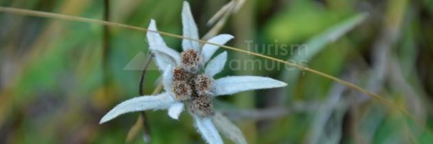 Din Borșa Fântâna în Rezervația Științifică Piatra Rea
