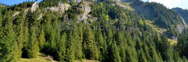 Parcul Național Munții Rodnei: Din Borșa Fântâna, în Rezervația Piatra Rea