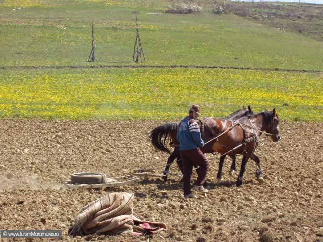 Țăran la muncile câmpului