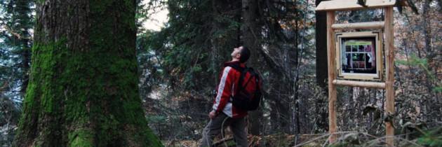Păduri de fag din Groșii Țibleșului și Strâmbu Băiuț incluse în patrimoniul UNESCO