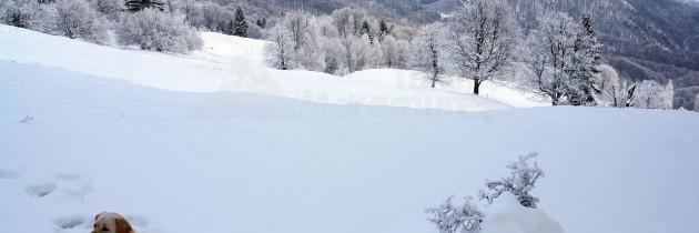 De la Firiza spre vârful Pleștioara și Saua Dia – iarna
