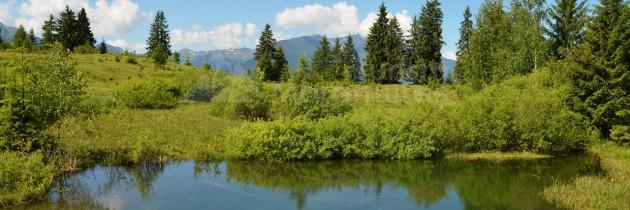 Borşa Poiană – tăurile La Cunună și Măgura – valea Birţu