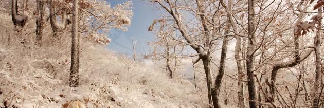 Vârful Poca, Chiuzbaia – iarna