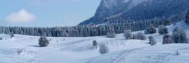 În Poiana Boului, prin Pasul Gutâi – iarna
